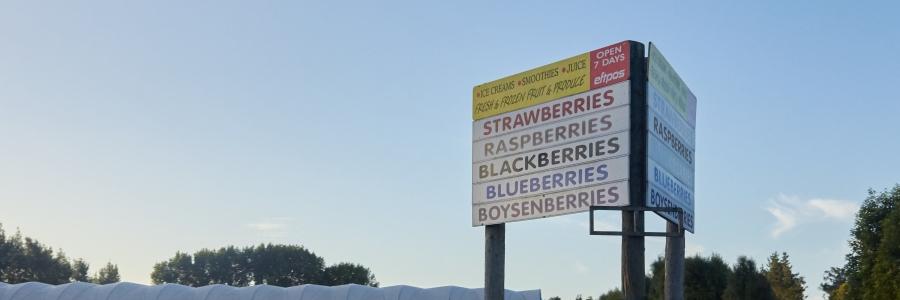 Ye Olde Berry Farm Tauwhare Road