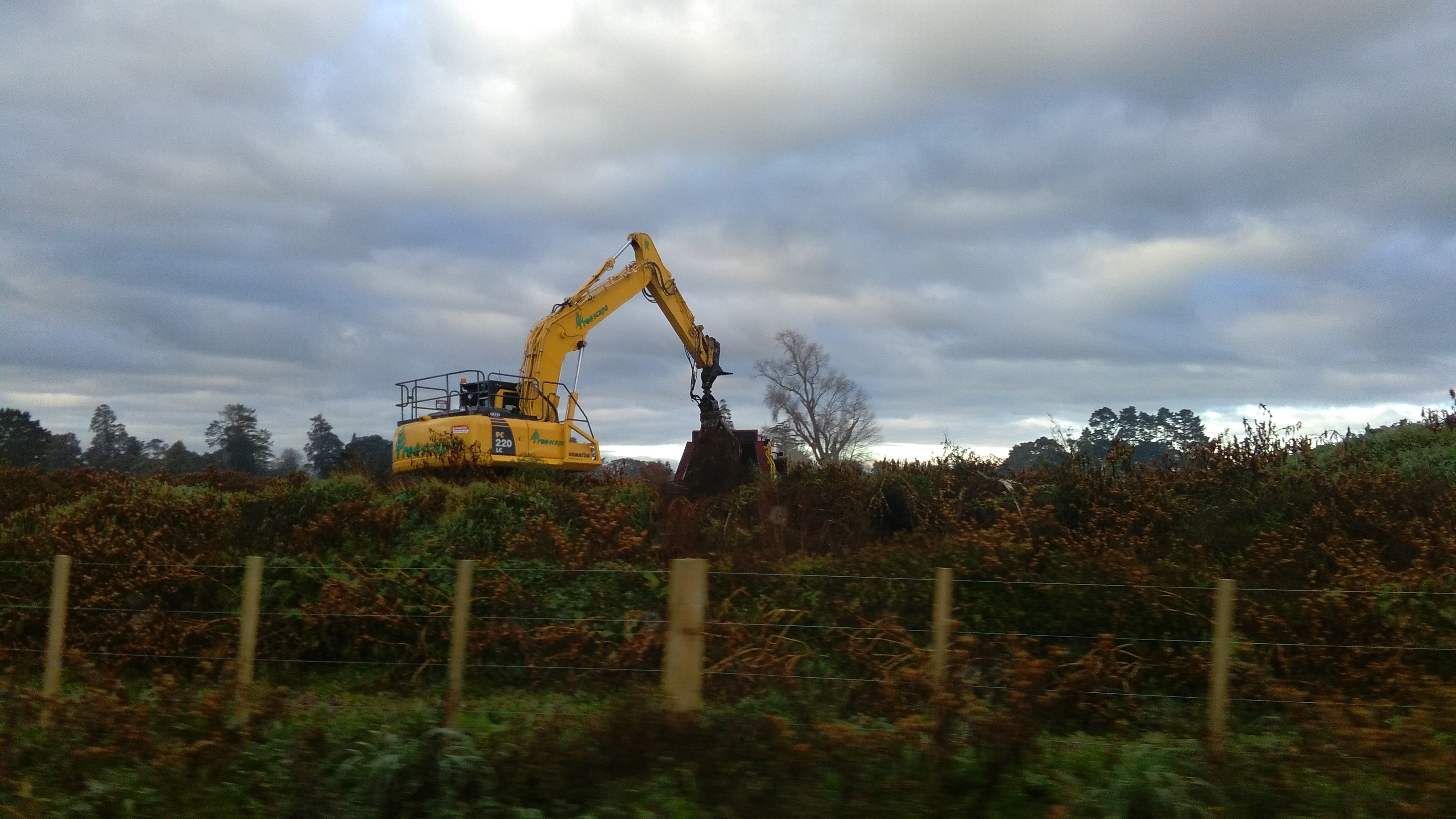 clearing site