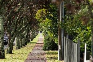 Autumn along Matangi Road