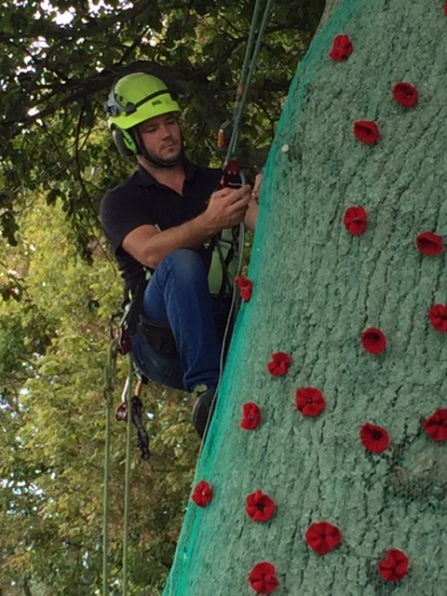 Arborist putting up the Anzac Poppy Display in Jack Foster Reserve