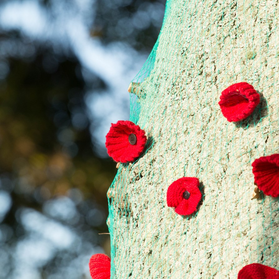 ANZAC Poppies adorning a tree in Jack Foster Reserve