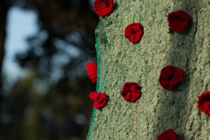 Hand Made ANZAC Poppies adorning a tree in Jack Foster Reserve