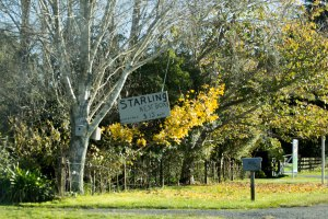 Starling boxes for sale sign