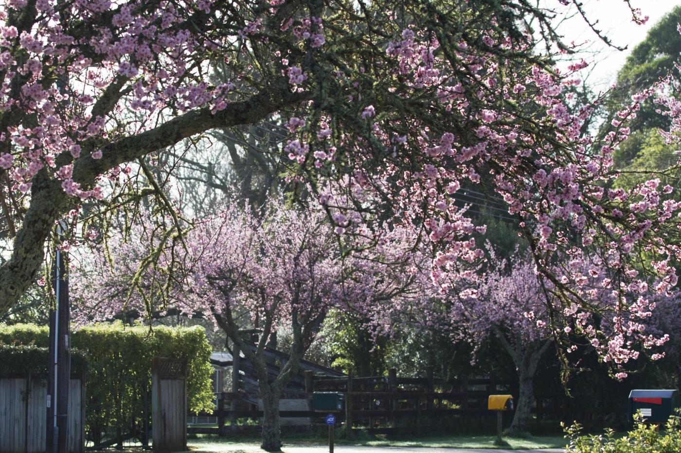 Closer detail of Blossom