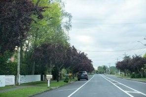 Matangi Road mid spring