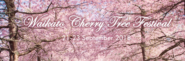 Waikato Cherry Tree Festival, Cherries in bloom
