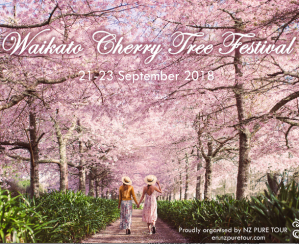 Waikato Cherry Tree Festival